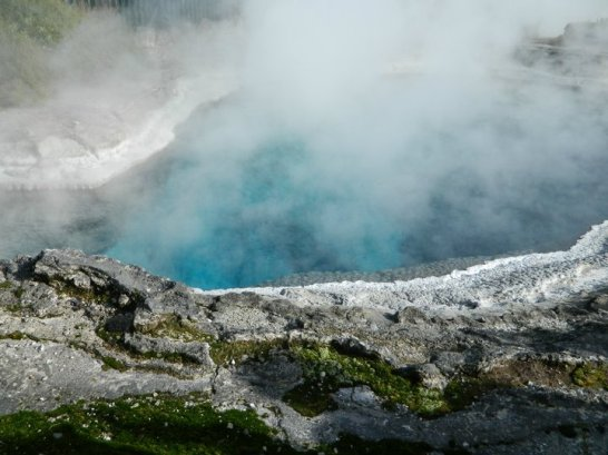 Thermal Pool in Te Puia