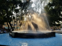 Coyote Fountain in Coyoacan
